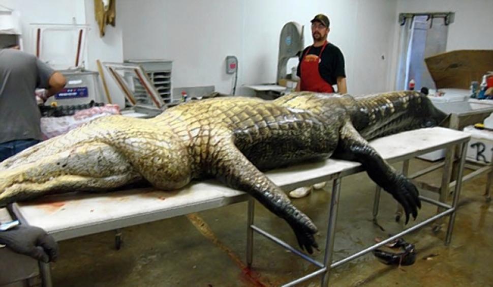 gator20n-9-web